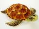 Plyšová želva hnědá-1.jpg