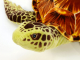Plyšová želva hnědá-4.jpg