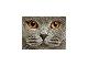 quercetti-photo-pixel-4-3.jpg