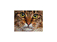 quercetti-photo-pixel-art-4-2.jpg