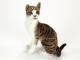 Kočka Domácí - 3.jpg
