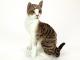 Kočka Domácí - 4.jpg