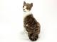 Kočka Domácí - 6.jpg
