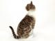 Kočka Domácí - 7.jpg