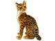 Kočka Ocelot - 2.jpg