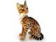 Kočka Ocelot - 7.jpg
