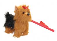 Pes Yorkshir s vodítkem