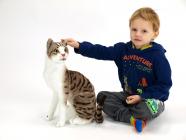 Kočka Micka domácí