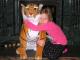 Plyšový tygr oranžový sedící-3.jpg