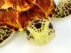 Plyšová želva hnědá-3.jpg