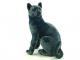 Kočka Ruská - 3.jpg