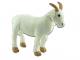 Koza Líza - 2.jpg