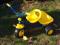 Šlapací tříkolka s odklopným valníkem